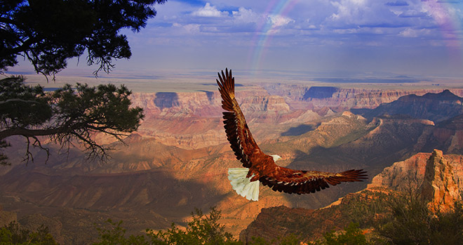 Gaiatravel-USA-2017-eagle-takes-flight-over-grand-canyon